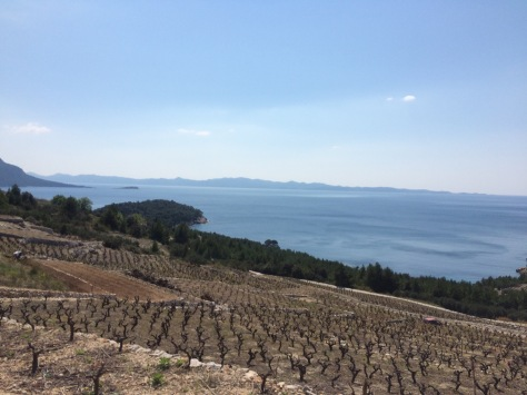 Vineyards everywhere